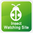 Insect Watching Site